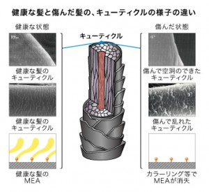 mechanism_02_001